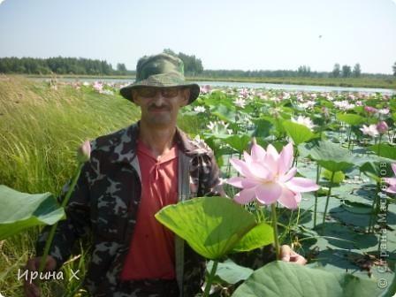 Недалеко от села где я живу, есть озеро Байкал, названное так потому, наверное, что очертаниями похоже на общеизвестное. В июле - авгусе там цветут лотосы. В нашей семье есть традиция - выезжать и любоваться этими волшебными цветами. Предлагаю желающим присоединиться... фото 2