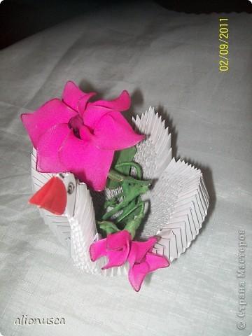 дикая роза. фото 1