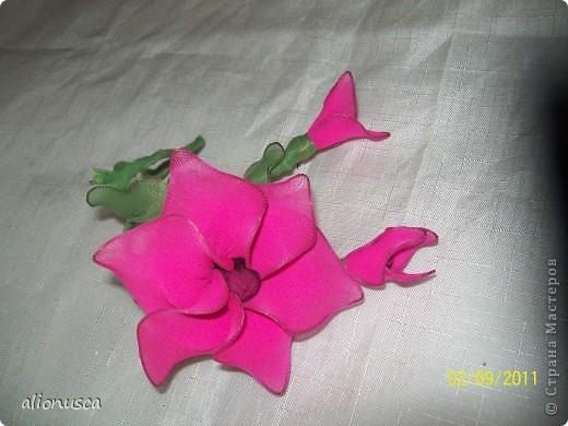 дикая роза. фото 2