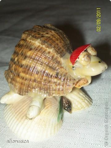 моя черепаха фото 1