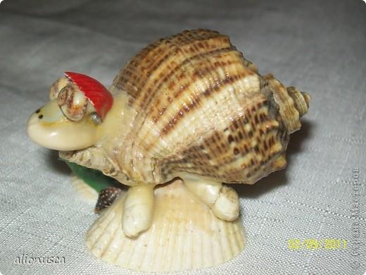 моя черепаха фото 3