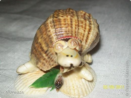 моя черепаха фото 4