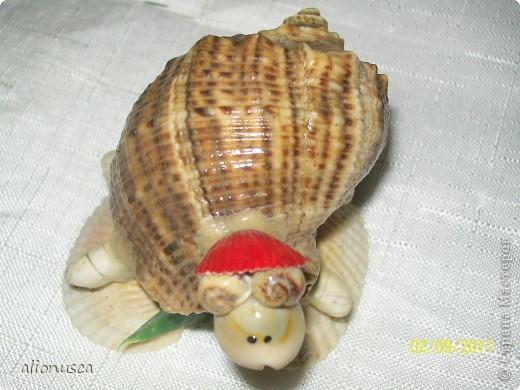 моя черепаха фото 5