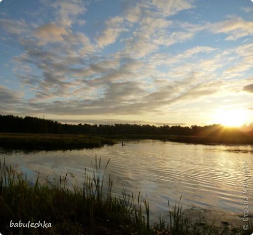 Вечереет.5-е сентября.Иду к реке Уча,давно здесь не была.Тропинка стала такой узкой, шириной в одну ступню. Травы высокие,густые.А это березка,освещенная заходящим солнцем. фото 4