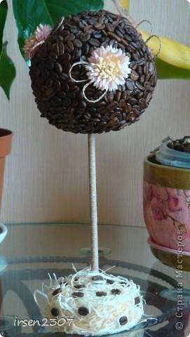 Очередное кофейное дерево фото 1
