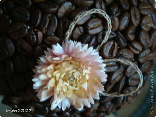 Очередное кофейное дерево фото 3