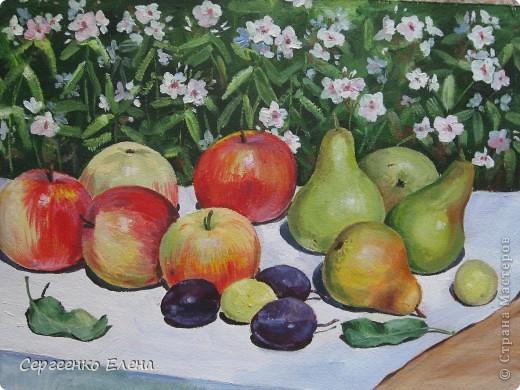 Яблок в этом году в садах очень много. Решила я написать натюрморт.  Разложила красиво яблоки, начала рисовать. Уж больно они сладкие, сочные! Пишу, а так и хочется откусить! Решила сначала одно яблочко съесть, потом второе, так незаметно, почти все и съела. Вкуснотища! Здесь нарисованы яблоки двух сортов: жигулёвское и уэлси. Только закончила картину, сразу отправила на выставку самодеятельных художников в областную картинную галерею.  фото 6