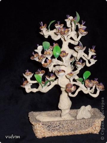 дерево винт  фото 1
