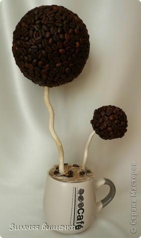 Кофемания....заразная штука. Вначале была куплена кружечка, а потом уже выросло  вот такое деревце. фото 2