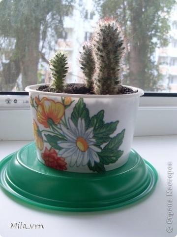 Такая вот небольшая (пока) коллекция плошечек с цветами скоро будет украшать мое окошко... фото 3