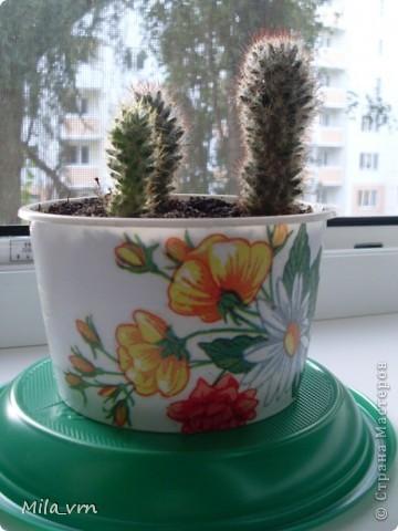 Такая вот небольшая (пока) коллекция плошечек с цветами скоро будет украшать мое окошко... фото 4
