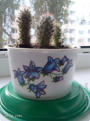 Такая вот небольшая (пока) коллекция плошечек с цветами скоро будет украшать мое окошко... фото 6
