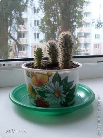 Такая вот небольшая (пока) коллекция плошечек с цветами скоро будет украшать мое окошко... фото 5