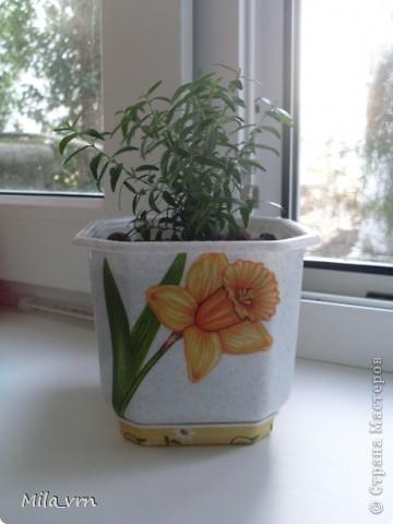 Такая вот небольшая (пока) коллекция плошечек с цветами скоро будет украшать мое окошко... фото 7