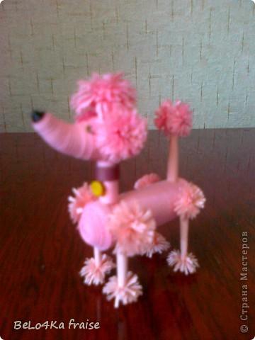 Розовая мадамка