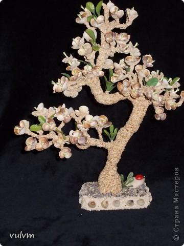 цветущий абрикос фото 1