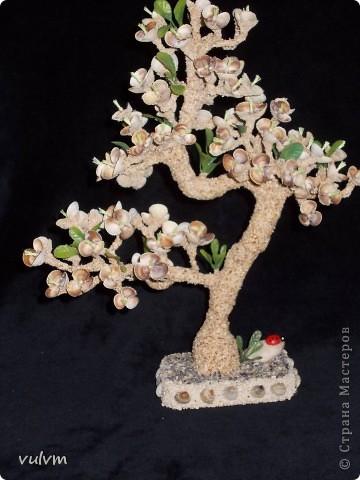 цветущий абрикос фото 2