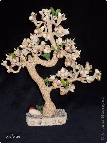 цветущий абрикос фото 3