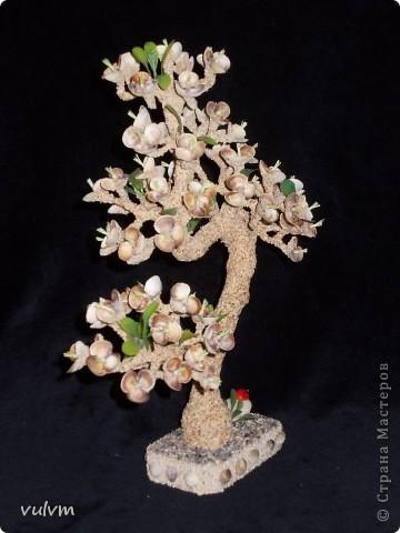 цветущий абрикос фото 5