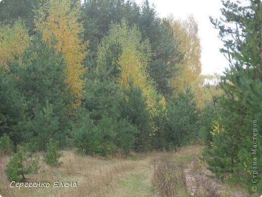 В выходной решили мы поехать на разведку в лес. Нет ли там опяток? При въезде в лес стоит замечательный волк (мой товарищ). фото 18