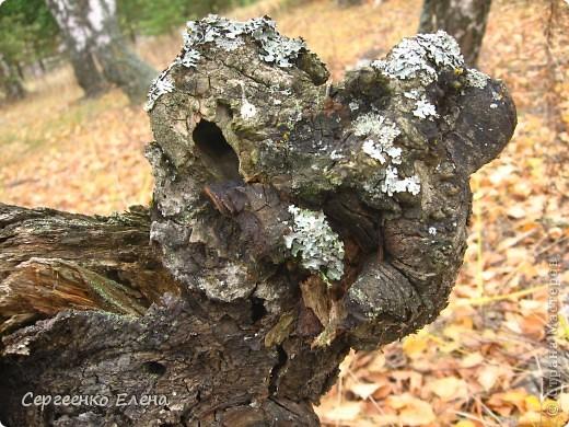 В выходной решили мы поехать на разведку в лес. Нет ли там опяток? При въезде в лес стоит замечательный волк (мой товарищ). фото 17