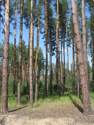 В выходной решили мы поехать на разведку в лес. Нет ли там опяток? При въезде в лес стоит замечательный волк (мой товарищ). фото 9