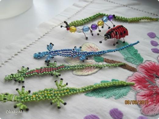 ящерица, змея,божья коровка,гусеница фото 1