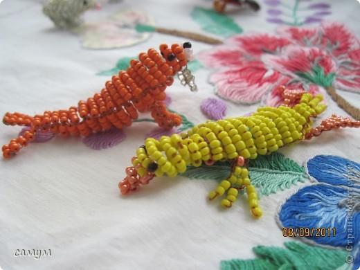 ящерица, змея,божья коровка,гусеница фото 5