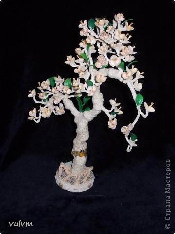 пчелиное дерево фото 3