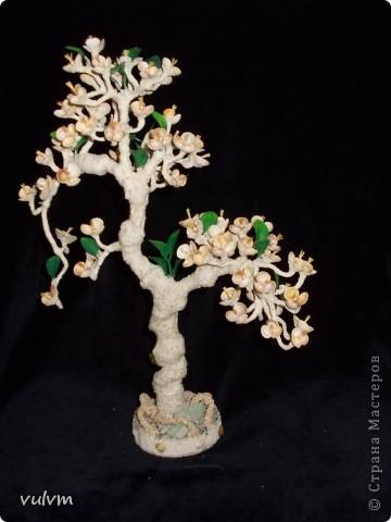 пчелиное дерево фото 4