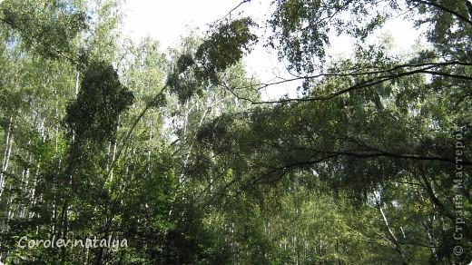 Здравствуйте, жители СМ! Приглашаю всех на прогулку по Бицевскому лесопарку! Вот в таком красивом и зеленом районе на окраине Москвы я и живу! Серез дорогу находится наш микрорайон.Это вход в лес. фото 6