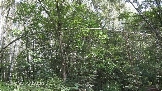 Здравствуйте, жители СМ! Приглашаю всех на прогулку по Бицевскому лесопарку! Вот в таком красивом и зеленом районе на окраине Москвы я и живу! Серез дорогу находится наш микрорайон.Это вход в лес. фото 8