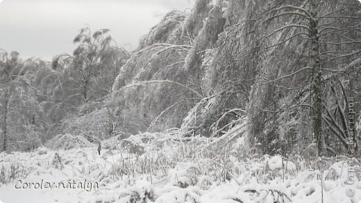 Здравствуйте, жители СМ! Приглашаю всех на прогулку по Бицевскому лесопарку! Вот в таком красивом и зеленом районе на окраине Москвы я и живу! Серез дорогу находится наш микрорайон.Это вход в лес. фото 31