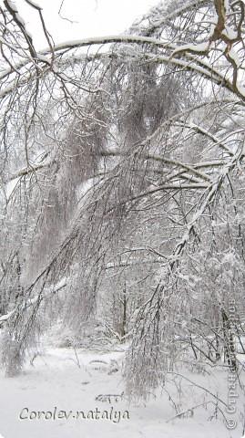 Здравствуйте, жители СМ! Приглашаю всех на прогулку по Бицевскому лесопарку! Вот в таком красивом и зеленом районе на окраине Москвы я и живу! Серез дорогу находится наш микрорайон.Это вход в лес. фото 30