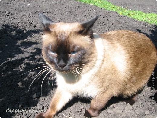 Здравствуйте, это я - Ваш старый знакомый - Мурзавей. Пока  хозяева уехали копать картошку в дождь (я над ними обсмеялся!), решил свой фоторепортаж опубликовать. Как я отдыхал летом. фото 6