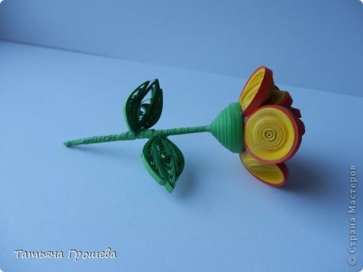 Чайная роза. фото 3