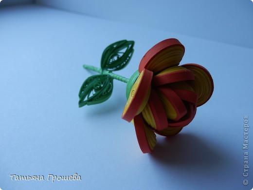 Чайная роза. фото 1