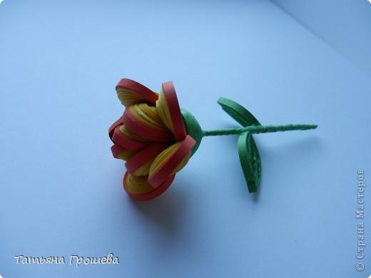 Чайная роза. фото 2
