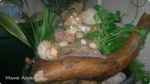 Мой первый комнатный фонтан фото 2