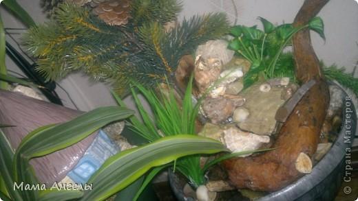 Мой первый комнатный фонтан фото 3
