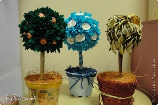 новые деревца фото 2