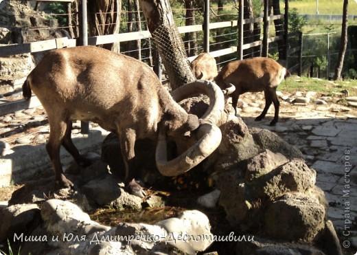 Тбилисский зоопарк встретил нас множеством запретов с юмором )) К сожалению всех животных зоопарка мы здесь представить не сможем, так как удачное фото сделать было довольно непросто. Так за кадром остались обезьяны, волки, шакалы, яки, олени, дикобразы...  фото 6