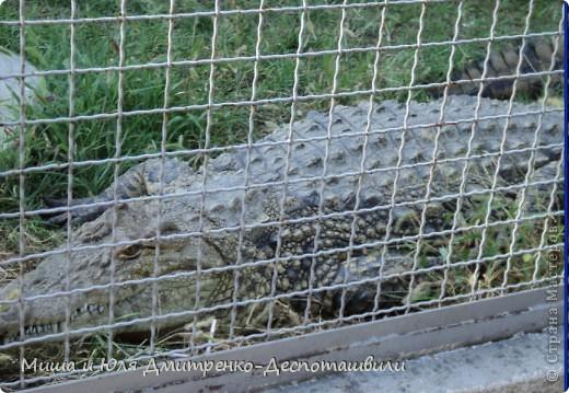 Тбилисский зоопарк встретил нас множеством запретов с юмором )) К сожалению всех животных зоопарка мы здесь представить не сможем, так как удачное фото сделать было довольно непросто. Так за кадром остались обезьяны, волки, шакалы, яки, олени, дикобразы...  фото 11