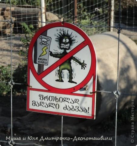 Тбилисский зоопарк встретил нас множеством запретов с юмором )) К сожалению всех животных зоопарка мы здесь представить не сможем, так как удачное фото сделать было довольно непросто. Так за кадром остались обезьяны, волки, шакалы, яки, олени, дикобразы...  фото 17