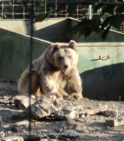 Тбилисский зоопарк встретил нас множеством запретов с юмором )) К сожалению всех животных зоопарка мы здесь представить не сможем, так как удачное фото сделать было довольно непросто. Так за кадром остались обезьяны, волки, шакалы, яки, олени, дикобразы...  фото 16