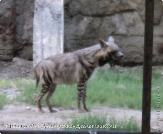 Тбилисский зоопарк встретил нас множеством запретов с юмором )) К сожалению всех животных зоопарка мы здесь представить не сможем, так как удачное фото сделать было довольно непросто. Так за кадром остались обезьяны, волки, шакалы, яки, олени, дикобразы...  фото 12