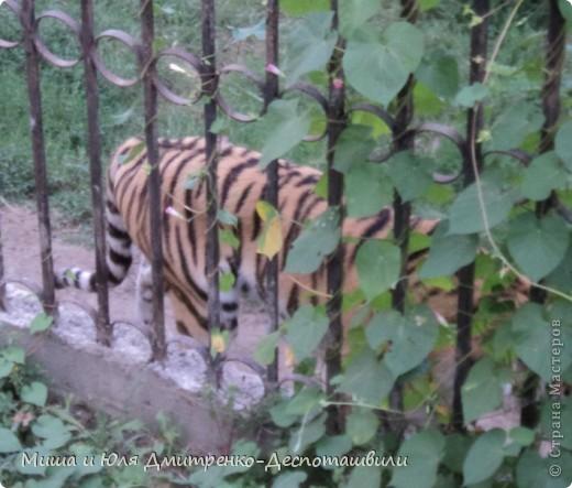 Тбилисский зоопарк встретил нас множеством запретов с юмором )) К сожалению всех животных зоопарка мы здесь представить не сможем, так как удачное фото сделать было довольно непросто. Так за кадром остались обезьяны, волки, шакалы, яки, олени, дикобразы...  фото 13