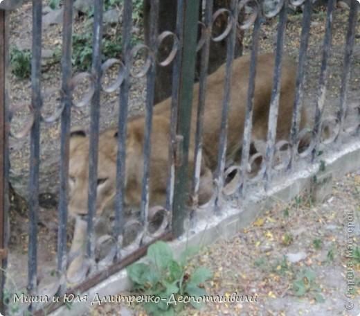 Тбилисский зоопарк встретил нас множеством запретов с юмором )) К сожалению всех животных зоопарка мы здесь представить не сможем, так как удачное фото сделать было довольно непросто. Так за кадром остались обезьяны, волки, шакалы, яки, олени, дикобразы...  фото 14