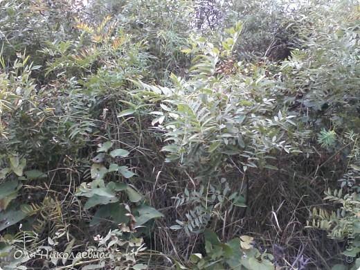 Хочу познакомить всех с Волжскими степями. Очень мне нравится наша природа, дышится легко!!! Безгранична наша матушка земля!!!  фото 6