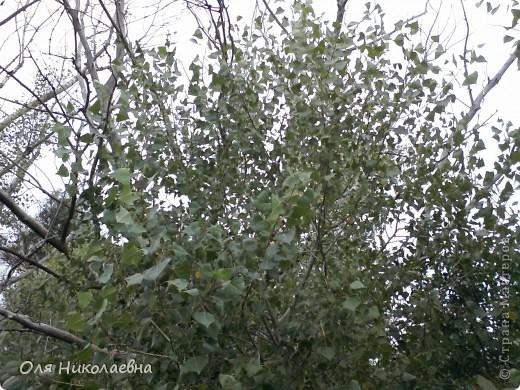 Хочу познакомить всех с Волжскими степями. Очень мне нравится наша природа, дышится легко!!! Безгранична наша матушка земля!!!  фото 7